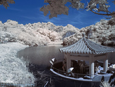 20150609-台南。牛埔生態保育區 IR590 & IR720: