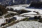 20160126-宜蘭。南山部落五十年之大雪景: