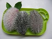 巧克力.布丁.小饅頭~刺蝟三姐妹!:壽司2.JPG