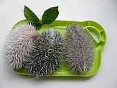 巧克力.布丁.小饅頭~刺蝟三姐妹!:壽司4.JPG