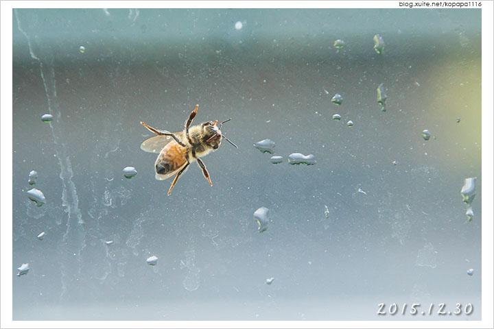 151230 花蓮鳳林-蜂之鄉蜜蜂生態教育館(12).jpg - 2015Q4 美食記錄