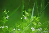 小花草也有春天:IMGP8745-11.jpg