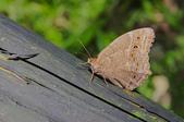 生態攝影:IMGP3322-11.jpg