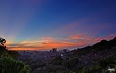 紅景天:IMGP2597-11.jpg
