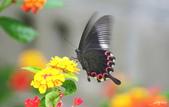 生態攝影:IMGP0282-11.jpg