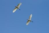 鳥:IMGP8399-11.jpg