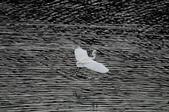 鳥:IMGP7279-11.jpg