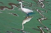 鳥集:IMGP8104-11.jpg