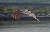 鳥集:IMGP6934-11.jpg
