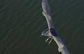 鳥集:IMGP6937-11.jpg