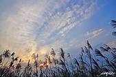 藍天、雲彩、蘆葦:IMGP3068-11.jpg