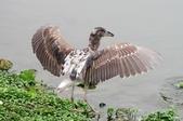 鳥集:IMGP1943-1.jpg