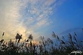 藍天、雲彩、蘆葦:IMGP3075-11.jpg
