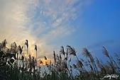 藍天、雲彩、蘆葦:IMGP3076-11.jpg