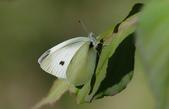生態攝影:IMGP2847-1.jpg