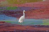 鳥集:IMGP7941-11.jpg