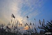 藍天、雲彩、蘆葦:IMGP3077-11.jpg