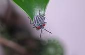昆蟲:IMGP6806-1.jpg