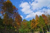 紅葉樹:IMGP0651-11.jpg
