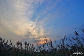 藍天、雲彩、蘆葦:IMGP3081-11.jpg