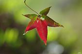 紅葉樹:IMGP2869-11.jpg