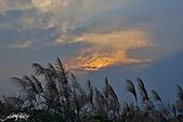 藍天、雲彩、蘆葦:IMGP3083-11.jpg