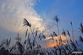 藍天、雲彩、蘆葦:IMGP3090-11.jpg