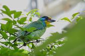 鳥:IMGP3213-11.jpg