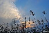 藍天、雲彩、蘆葦:IMGP3091-11.jpg