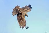 鳥:IMGP7021-11.jpg