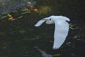 飛羽:IMGP3301-11.jpg