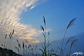 藍天、雲彩、蘆葦:IMGP3103-11.jpg