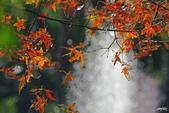 紅葉樹:IMGP7223-11.jpg