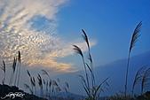 藍天、雲彩、蘆葦:IMGP3108-11.jpg