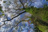 紅葉樹:IMGP8375-11.jpg
