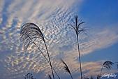 藍天、雲彩、蘆葦:IMGP3112-11.jpg
