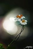 小花草也有春天:IMGP7979-11.jpg