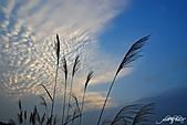 藍天、雲彩、蘆葦:IMGP3115-11.jpg