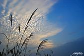 藍天、雲彩、蘆葦:IMGP3116-11.jpg