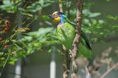 鳥:IMGP3196-11.jpg