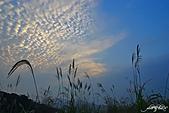 藍天、雲彩、蘆葦:IMGP3120-11.jpg
