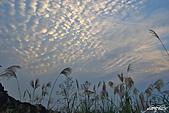 藍天、雲彩、蘆葦:IMGP3121-11.jpg