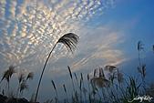 藍天、雲彩、蘆葦:IMGP3124-11.jpg