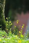 小花草也有春天:IMGP8007-11.jpg