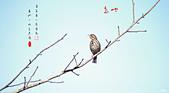鳥:IMGP8016-11.jpg