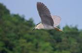 鳥:IMGP7062-11.jpg