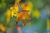 紅葉樹:IMGP1275-11.jpg