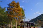 紅葉樹:IMGP0604-11.jpg