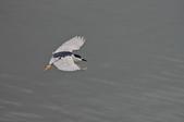 鳥集:IMGP6486-11.jpg