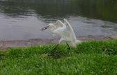 鳥集:IMGP6420-11.jpg